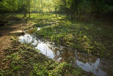 シュレーゲルの池