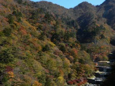 西丹沢の紅葉