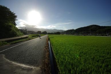 夏の陽射し1