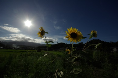 夏の陽射し2