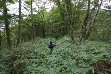 西丹沢の森を歩く