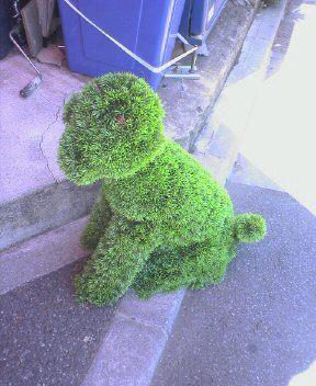 芝生犬??