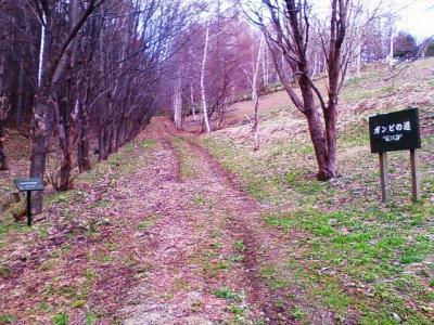 ガンビの道