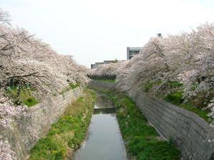 s-300px-Yamazaki-River.jpg