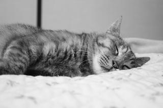 20090802 幸せな寝顔1_R