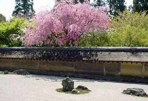 春の竜安寺