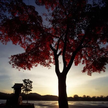 広沢池(京都市右京区)。作品に登場する寛朝僧正の遍照寺があった場所。