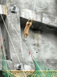 用意されたネットに飛び込んだ犬