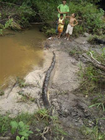 体長5mのアナコンダ