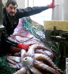 釣り上げた漁師と巨大イカ