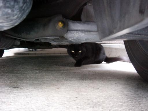 クロたんは車の下で。。