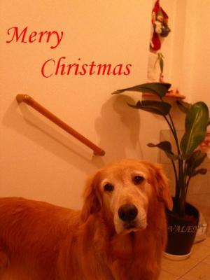 2007 Merry Christmas Liberty