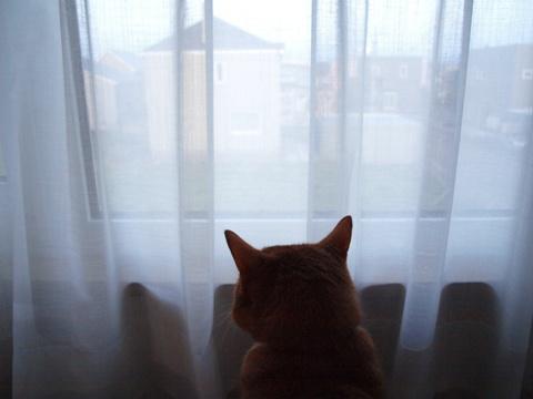 黄昏るジョゼ05(2011.05.06)