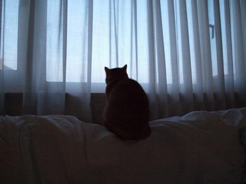 黄昏るジョゼ06(2011.05.06)