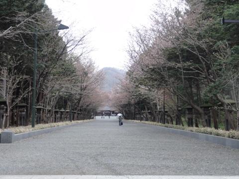 2011神宮桜02(2011.05.07)