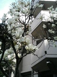白い花(人´∀`).☆.。.:*・