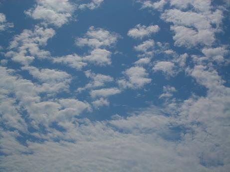 いわし雲?羊雲?