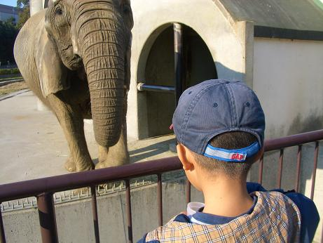 象にもえさやり
