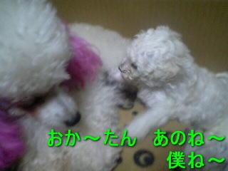 20070403201521.jpg