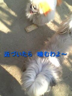 20070409183336.jpg