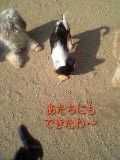 20070409183401.jpg
