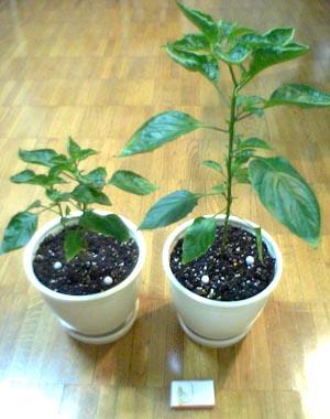 3代目植木鉢