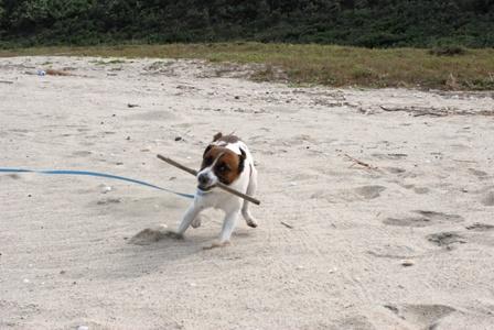 唐津の海で遊ぶハロ