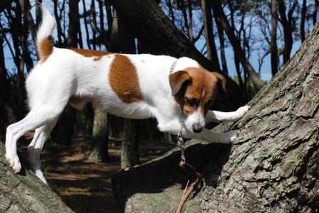 無理やり木登り