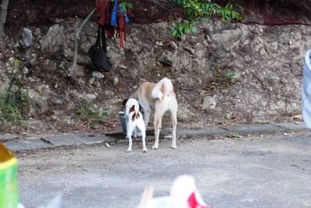 水を飲む犬達