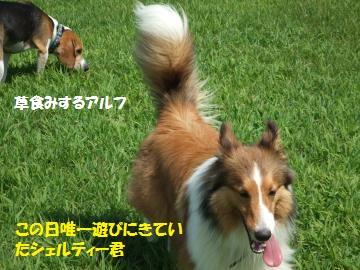 002_convert_20110721220402.jpg