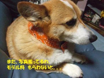 005_convert_20110624234531.jpg