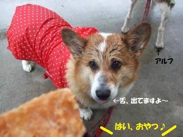 008_convert_20110530004846.jpg