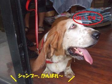 009_convert_20110808231939.jpg