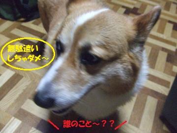 010_convert_20110710030840.jpg