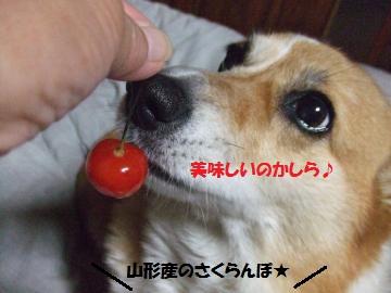 010_convert_20110712232817.jpg