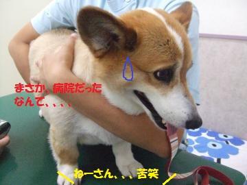 011_convert_20110814043408.jpg