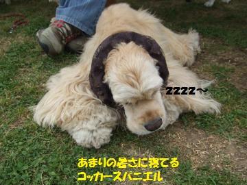 012_convert_20110522234901.jpg