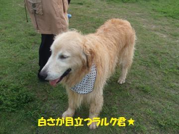 013_convert_20110801210253.jpg