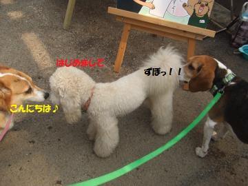 014_convert_20110703233848.jpg