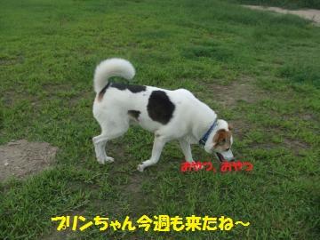 015_convert_20110801210342.jpg