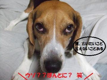 016_convert_20110710030627.jpg