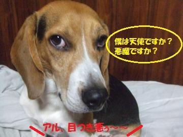 022_convert_20110710030738.jpg
