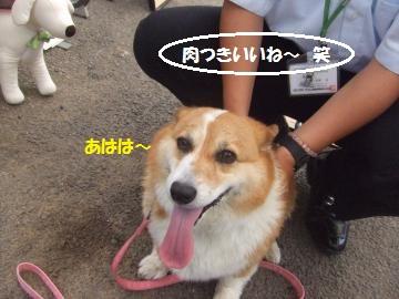 024_convert_20110703234215.jpg