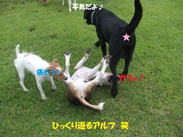 035_convert_20110705234139.jpg