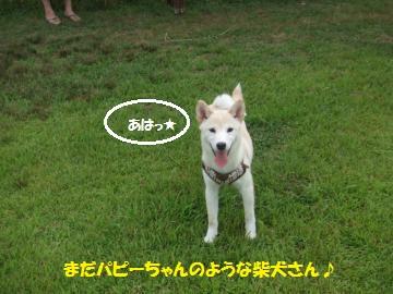 039_convert_20110705233848.jpg