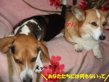 045_convert_20110622005924.jpg