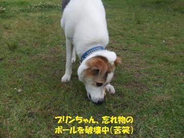 047_convert_20110606004647.jpg