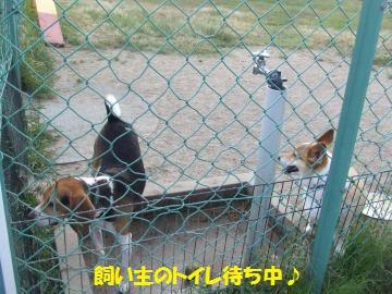 075_convert_20110816041754.jpg