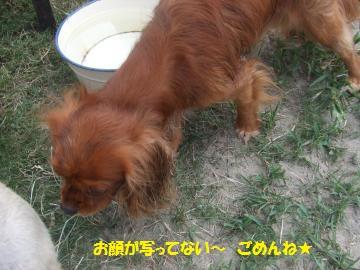 078_convert_20110816041519.jpg