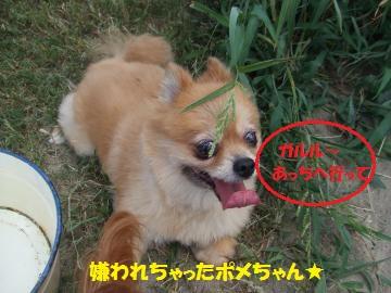 080_convert_20110816041605.jpg